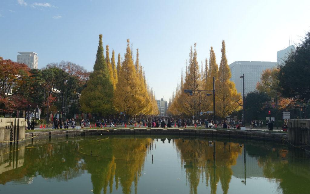 明治神宮外苑 噴水池から銀杏並木を眺める