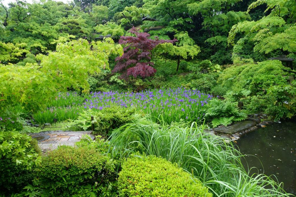 根津美術館 庭園 カキツバタ