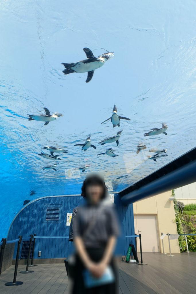 Sunshine aquarium 空飛ぶペンギン
