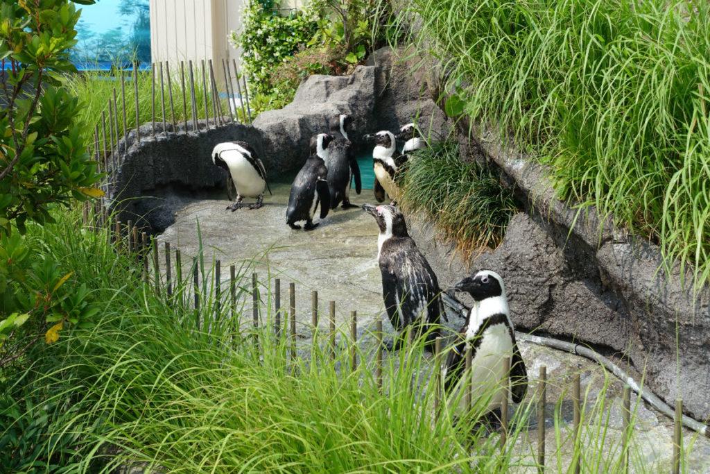 Sunshine aquarium ペンギン展示