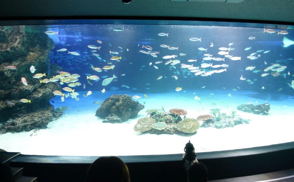 Sunshine aquarium 大き目の水槽