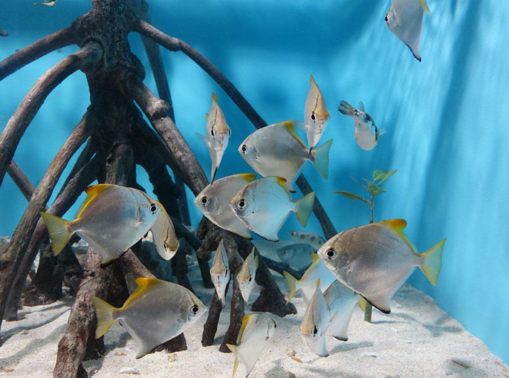 Sunshine aquarium 小さな水槽の熱帯魚