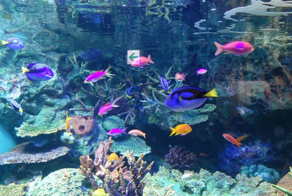 Sunshine aquarium カラフルな熱帯魚