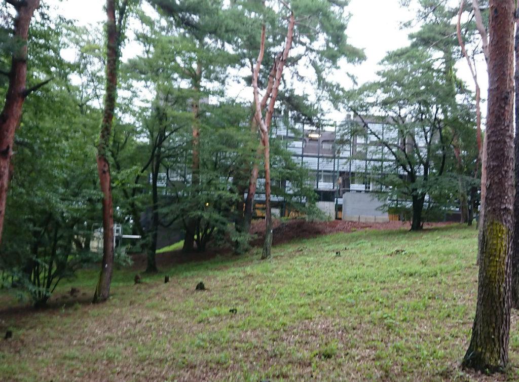 早稲田本庄高等学院 森の中の施設