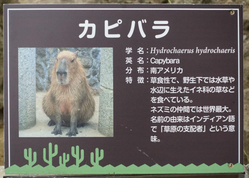 伊豆シャボテン動物公園 カピバラ説明看板