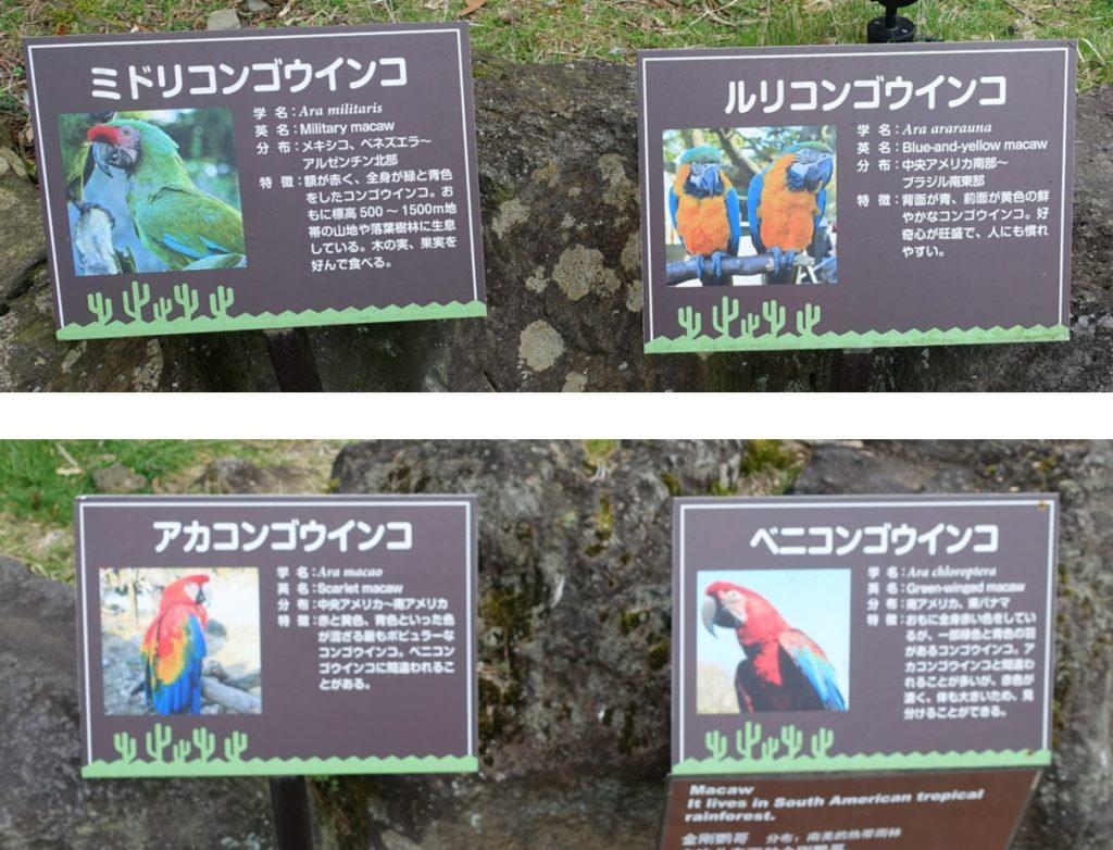 伊豆シャボテン動物公園 コンゴウインコ類看板