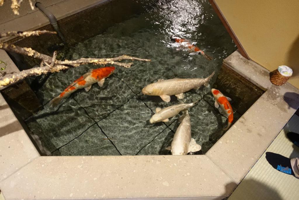 小樽 宏楽園 玄関階段下の池と鯉