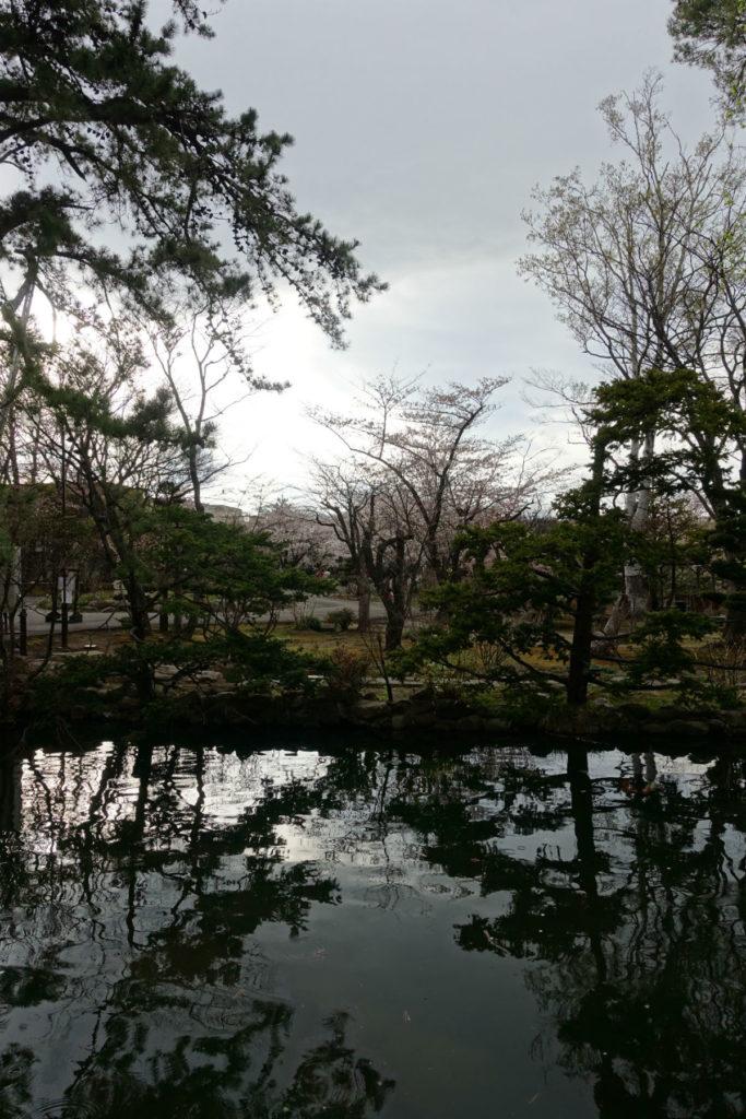 小樽 宏楽園 庭の鯉が池と桜