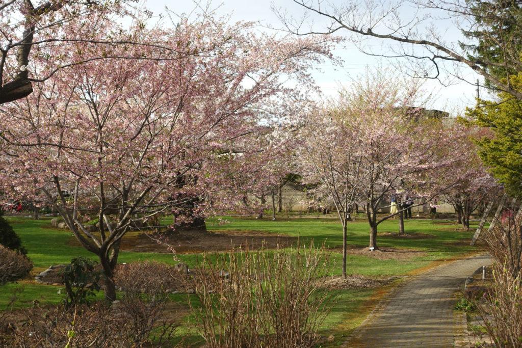 小樽 宏楽園 庭の多種の桜