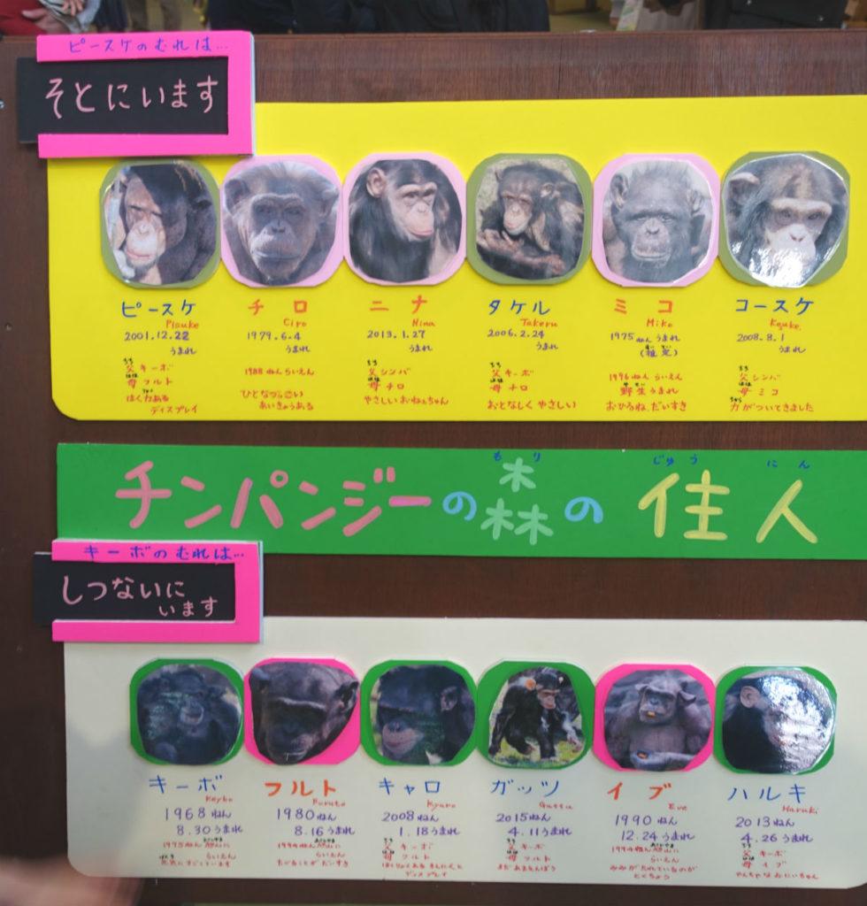北海道旭山動物園 チンパンジー館 2つの群れの紹介