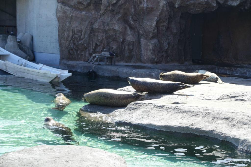 北海道旭山動物園 あざらし館 屋外側からの観察