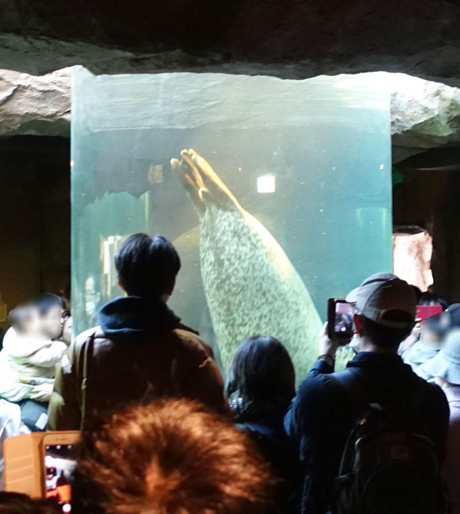 北海道旭山動物園 あざらし館 円柱水槽 一瞬で通り過ぎるあざらし 円柱水槽