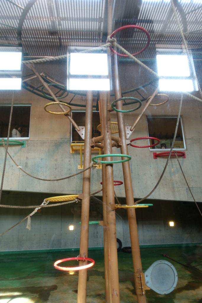 北海道旭山動物園 チンパンジー館 館内