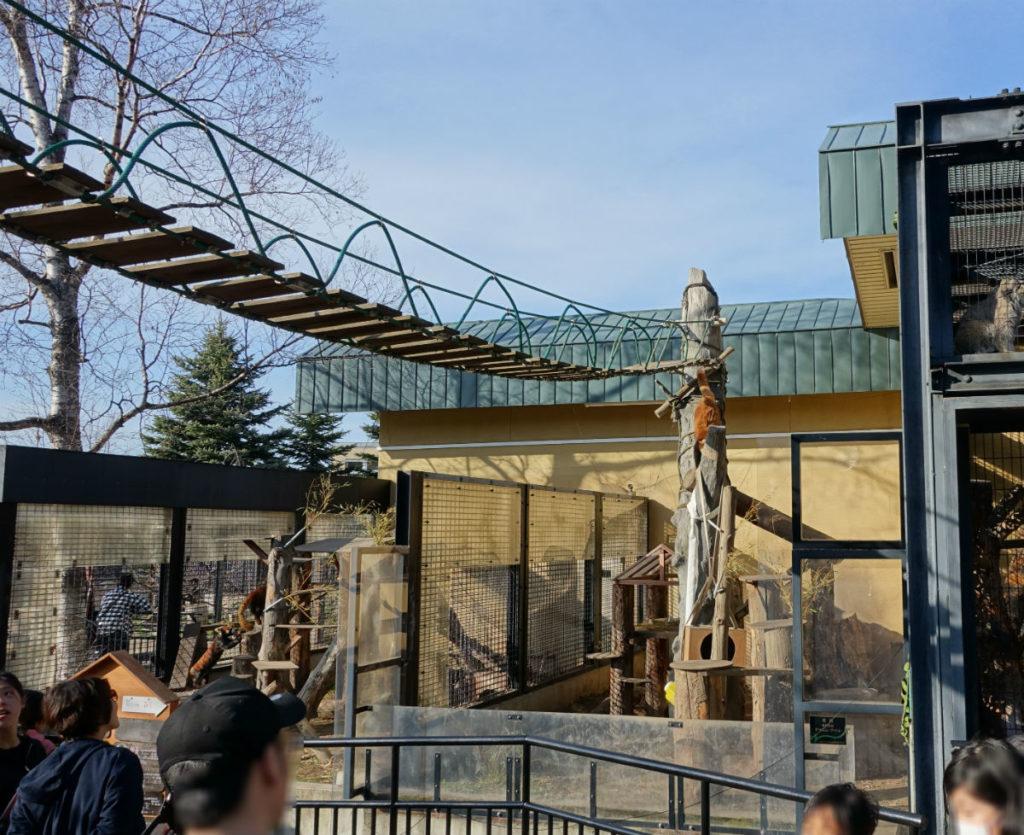 北海道旭山動物園 レッサーパンダ舎 吊り橋