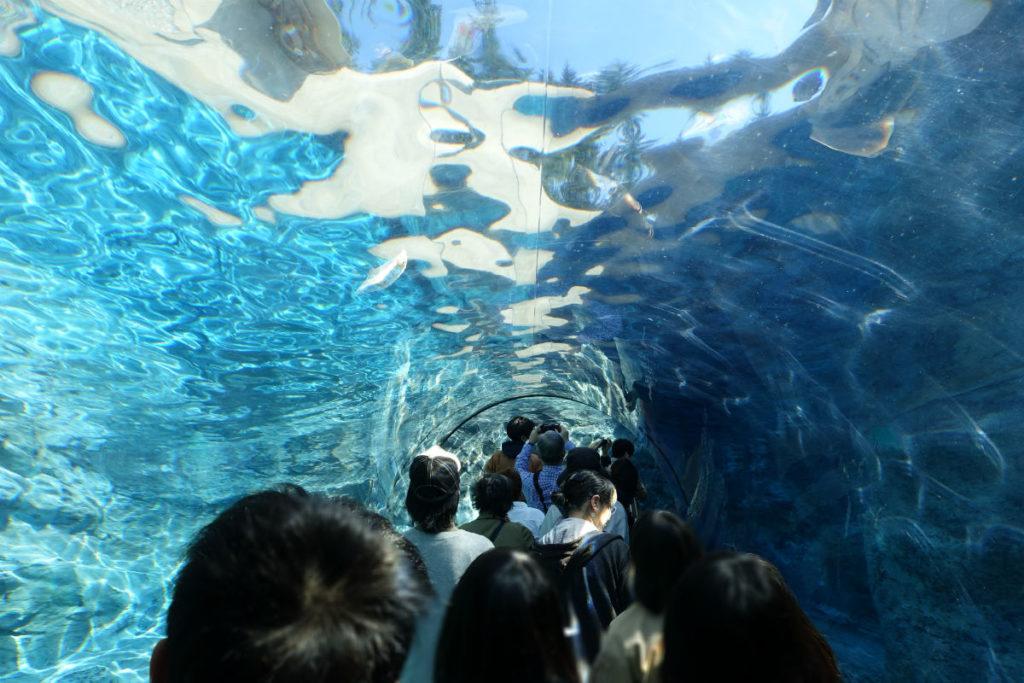 北海道旭山動物園 ペンギン館 アクリルトンネル