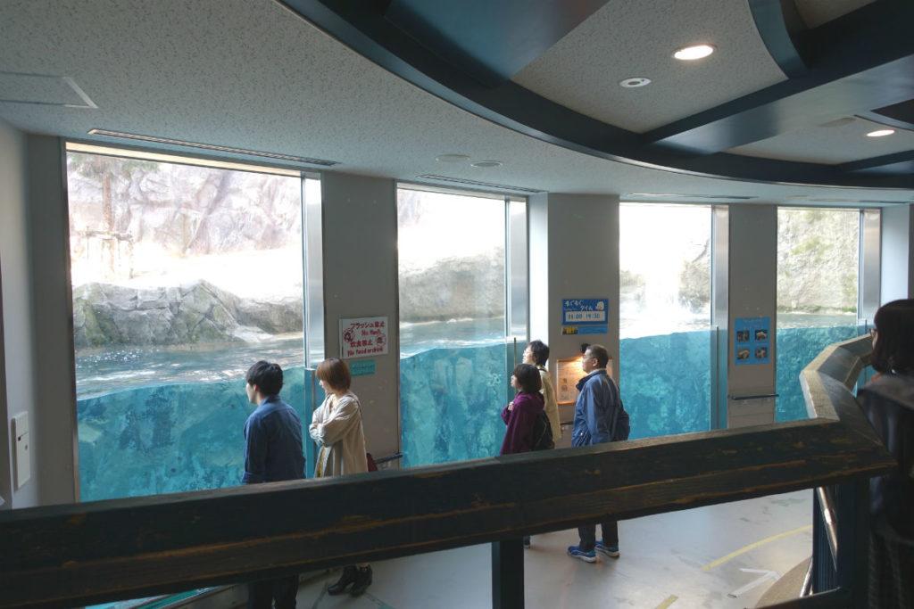北海道旭山動物園 ほっきょくぐま館 プール