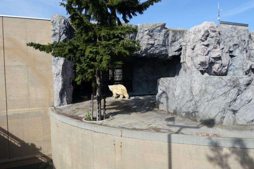 北海道旭山動物園 ほっきょくぐま館 屋外から