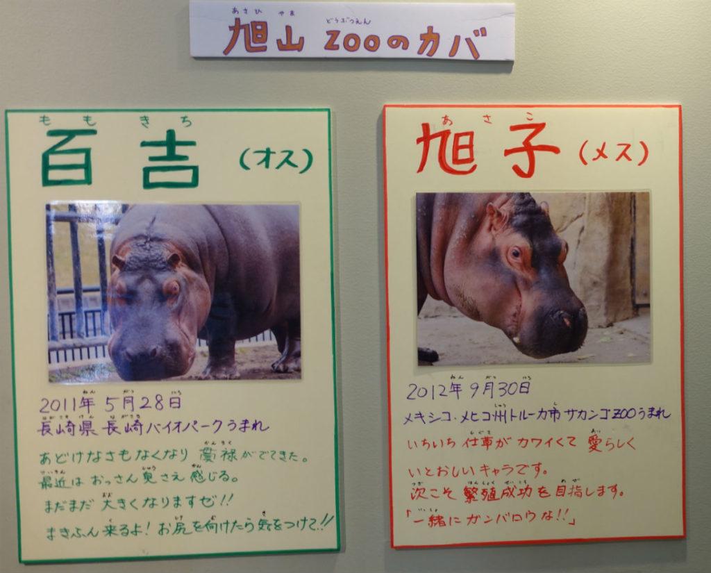 北海道旭山動物園 かば館 かば二頭の紹介