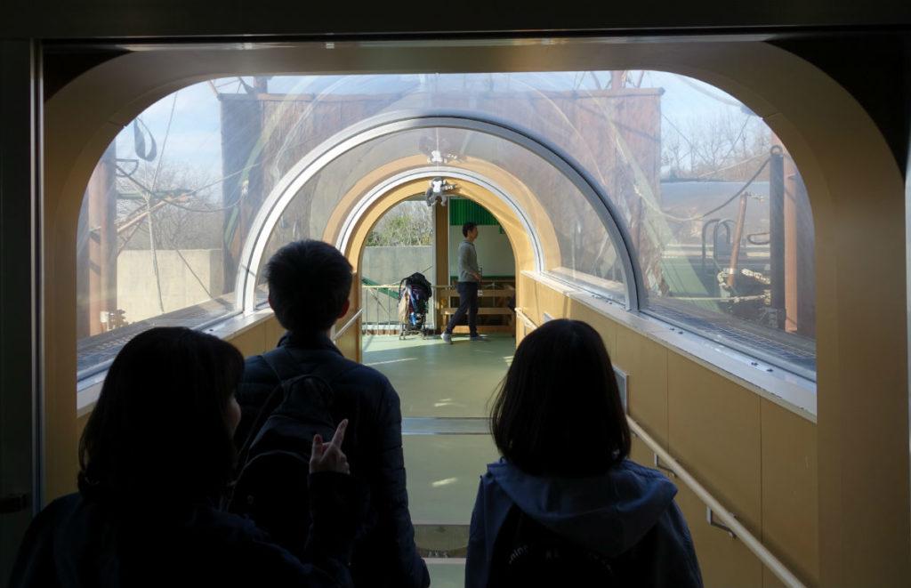 北海道旭山動物園 チンパンジー館 屋外へつながるアクリルトンネル