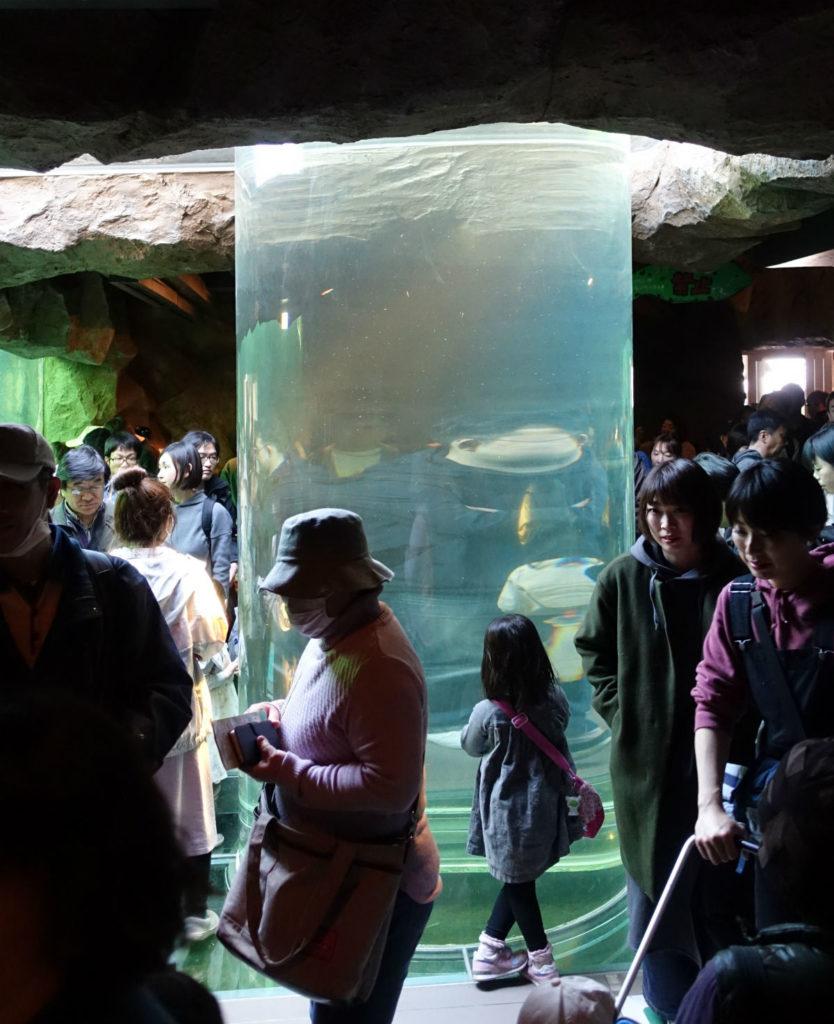 北海道旭山動物園 あざらし館 円柱水槽