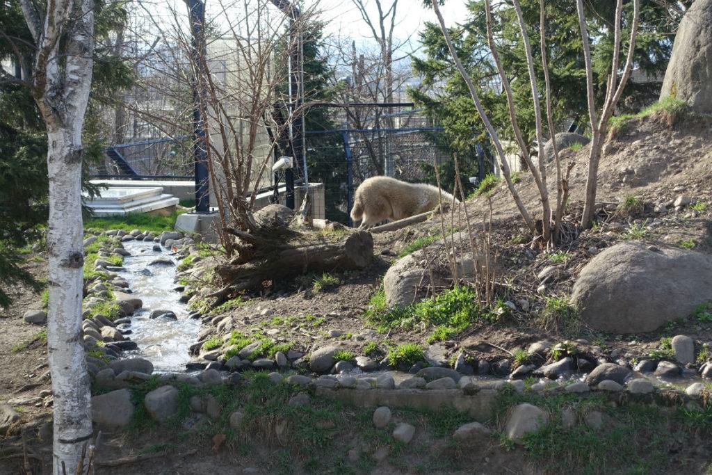 北海道旭山動物園 オオカミの森 屋外展示 小川