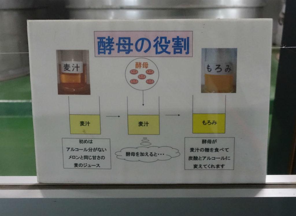 北海道余市 ニッカウヰスキー余市蒸留所 発酵棟の中 酵母の説明